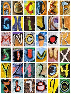 alphabet and numbers as seen in close-up photography of butterfly wings, by Kjell B. Sandved