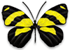 yellow and black striped butterfly